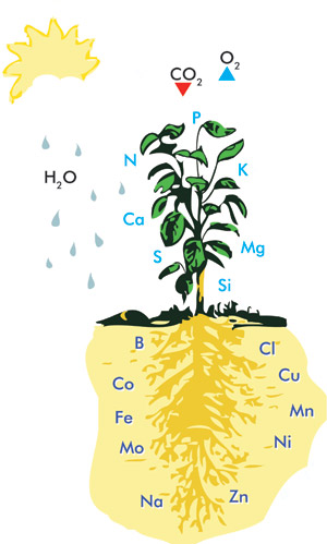 Boosting mineral uptake in plants greenhouse canada for Soil nutrients