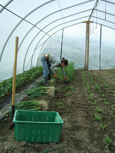 3972-Bruns-greenhouse-worker