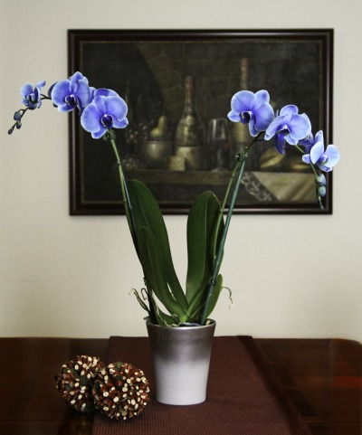 Blue Orchid A Cool Winner At Tpie Greenhouse Canada