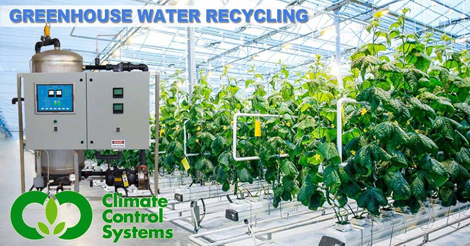 Greenhouse Water Recycling 1