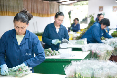 3350-Bouquet-production
