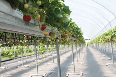 Growing under cover | Greenhouse Canada