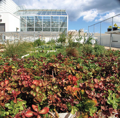 4904-Green-roof-on