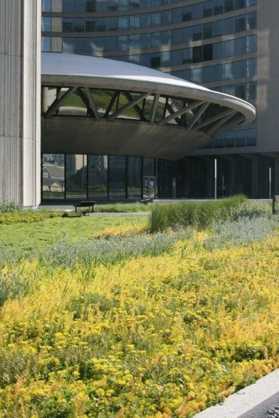 5382_green_roof_at_toronto_city_hall