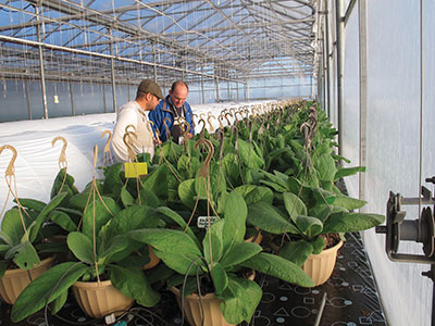 Major Research Funding Boost Greenhouse Canada