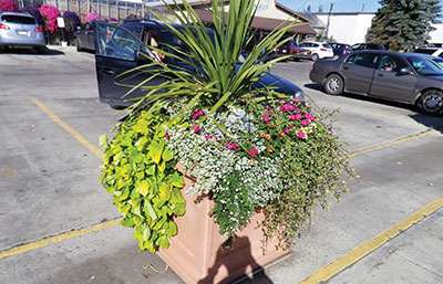 5620-Parking-lot-planter-MIRZA