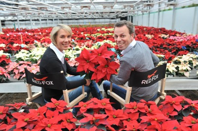6533_sonja_and_tobias_du776mmen_with_poinsettia2013_5