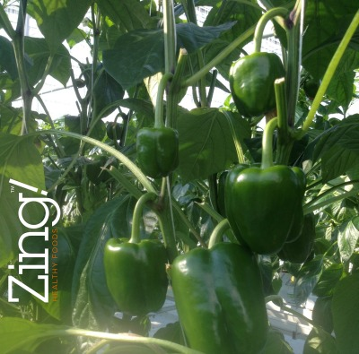6041_orangeline_farms_peppers