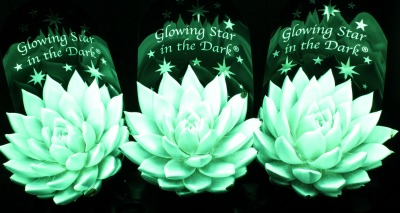 5962_glowing_star_in_the_dark_floraholland