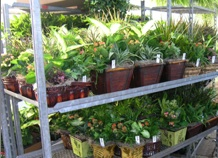 potted_plants_lindys