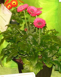 landscape_gerbera_northern_innovators_expo_09