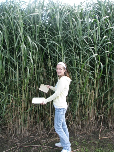 4357_miscanthus_packaging_-_tina_janzen_of_new_energy_farms