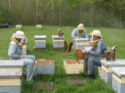 guelph_bees_2992