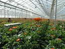 Key to keeping your greenhouse staff