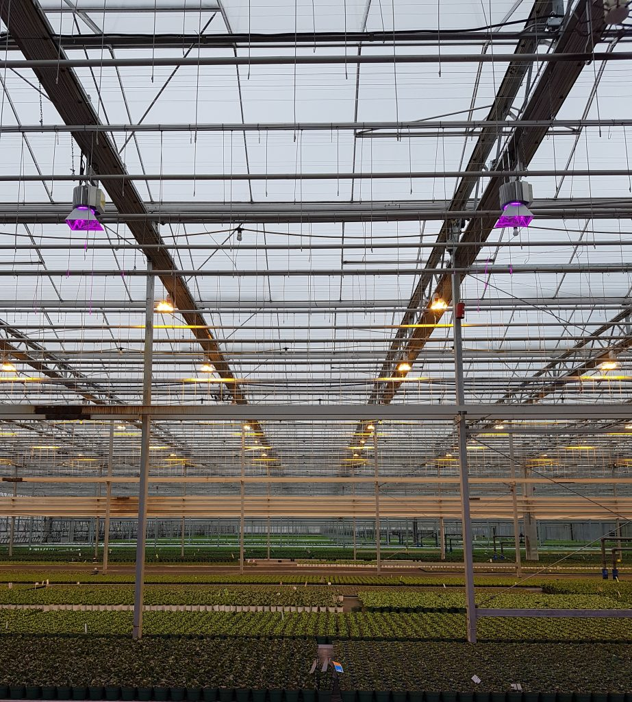 Tips and tricks for on-farm lighting trials