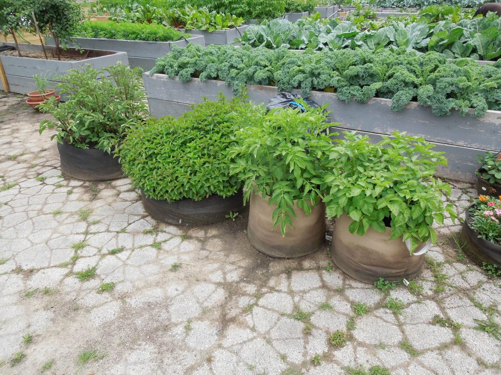 Small-space containers are big with new gardeners