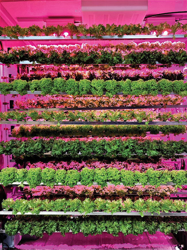 Modular farms open doors to commercial-scale plant production