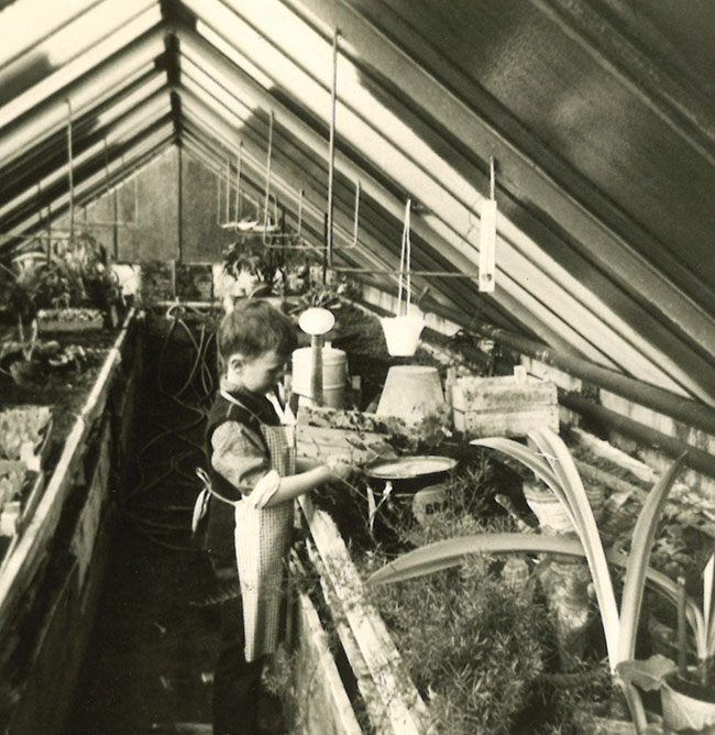 Greenhouse memoirs: A cultivated love
