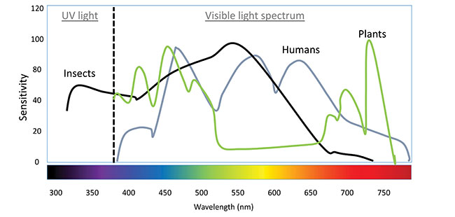 What LED lighting means for pest monitoring